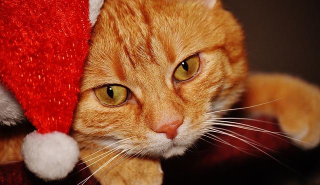 Christmas Cat or Yule Cat or Jólakötturinn, a large monster of Icelandic folklore